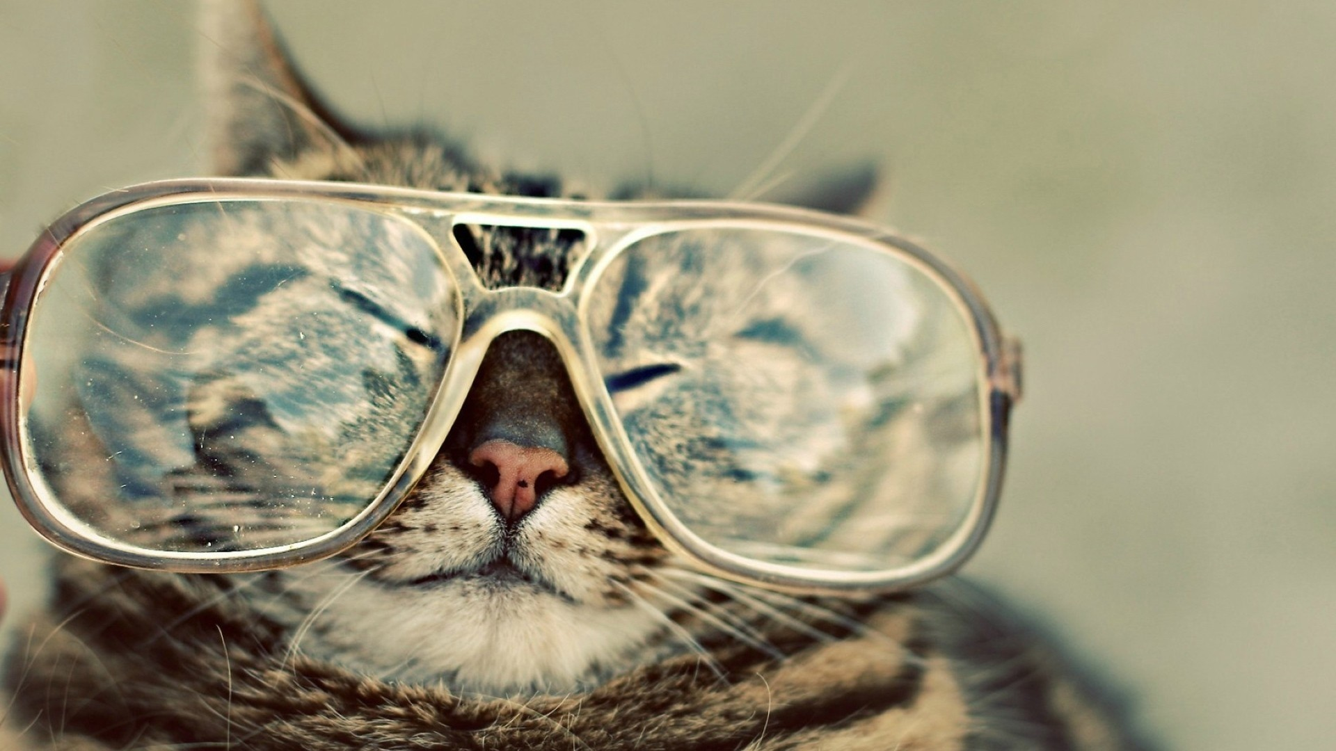 Cat With Glasses Pic