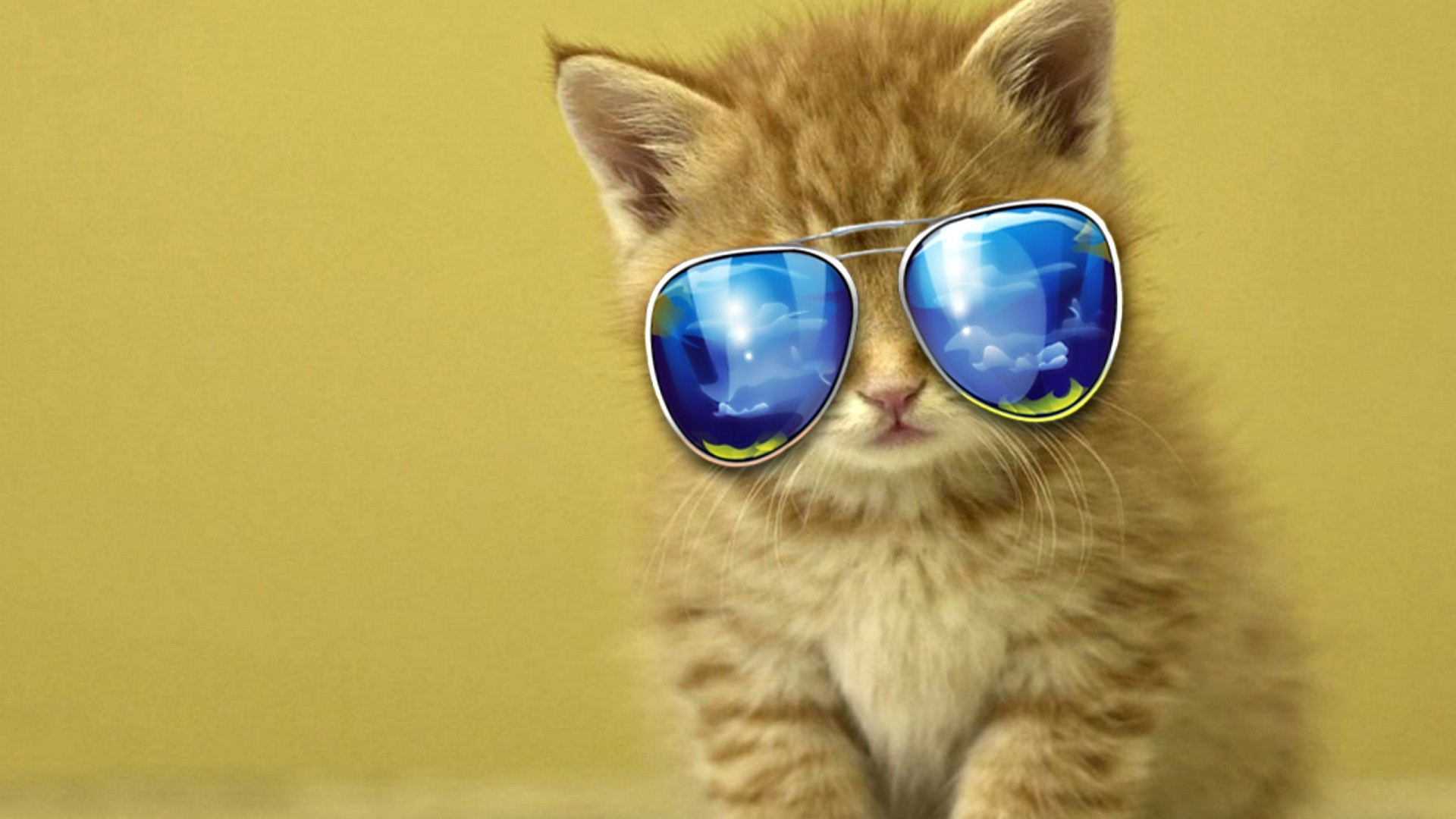 Cat With Glasses Picture