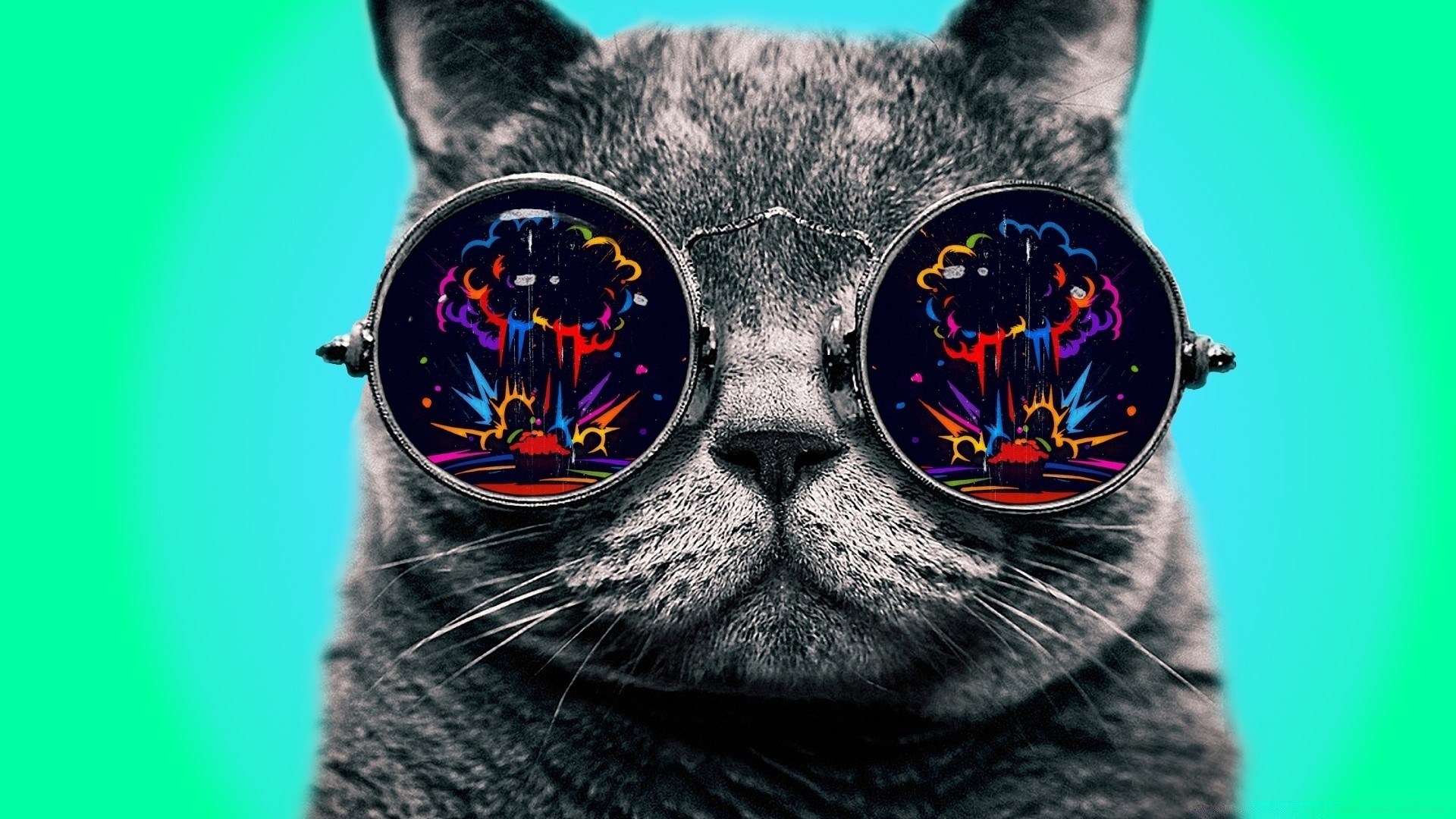 Cat With Glasses wallpaper photo hd