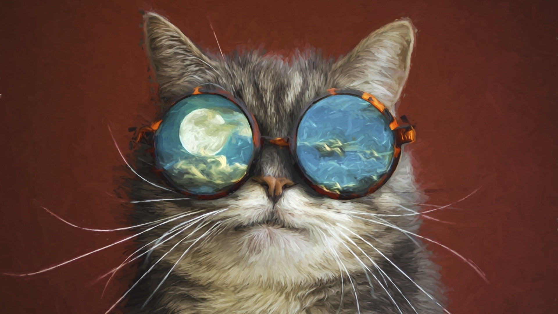 Cat With Glasses Wallpaper theme