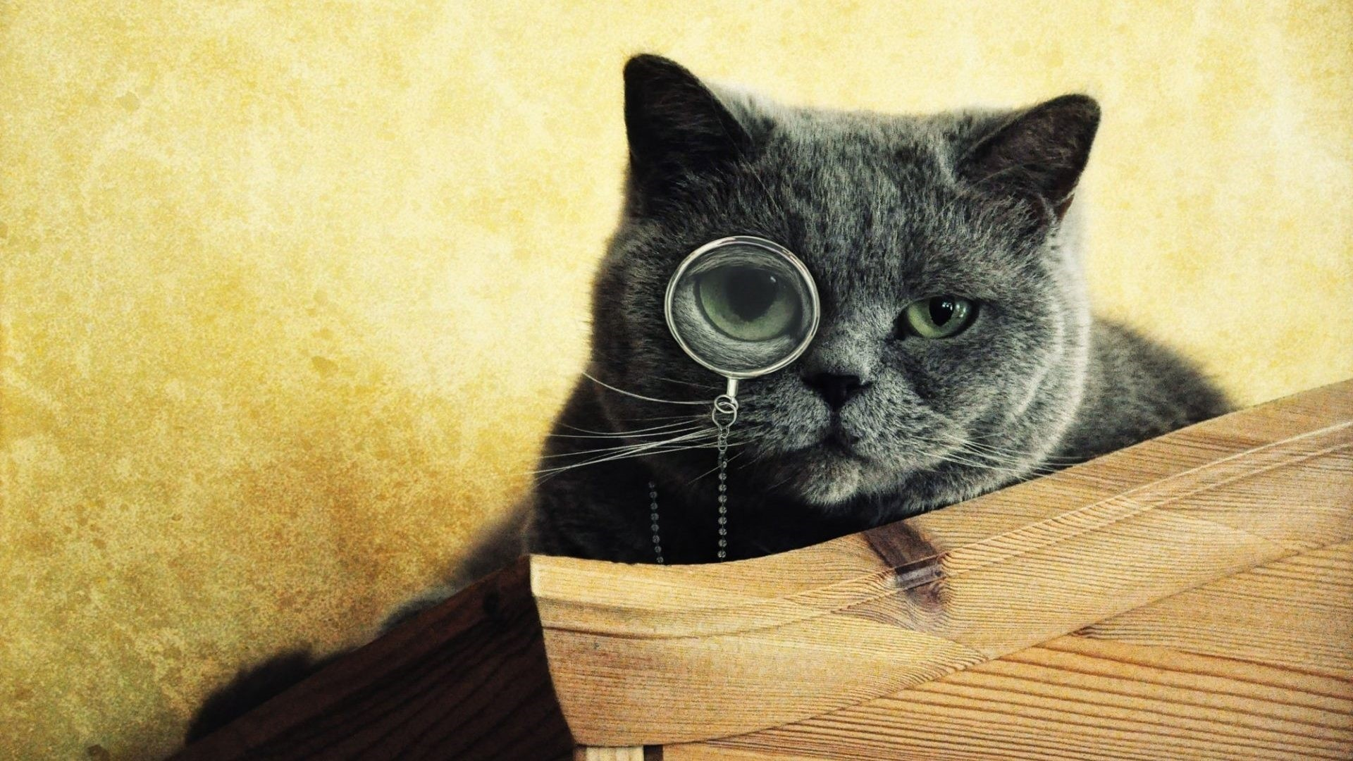 Cat With Glasses Background