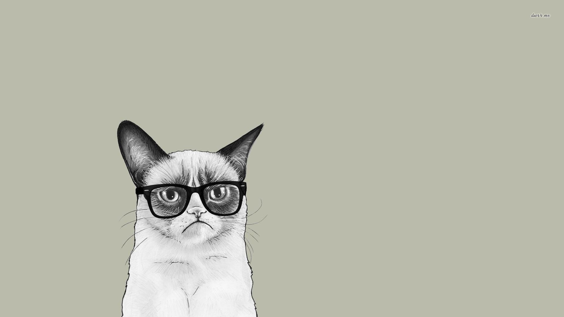 Cat With Glasses wallpaper for pc