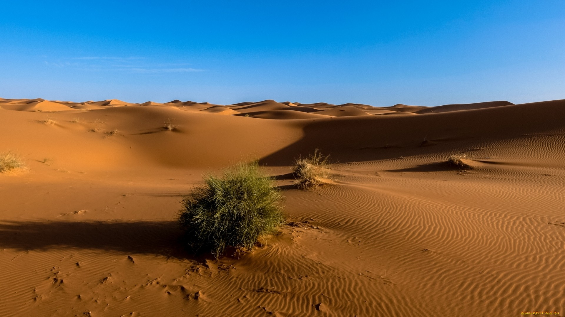 Sahara computer wallpaper