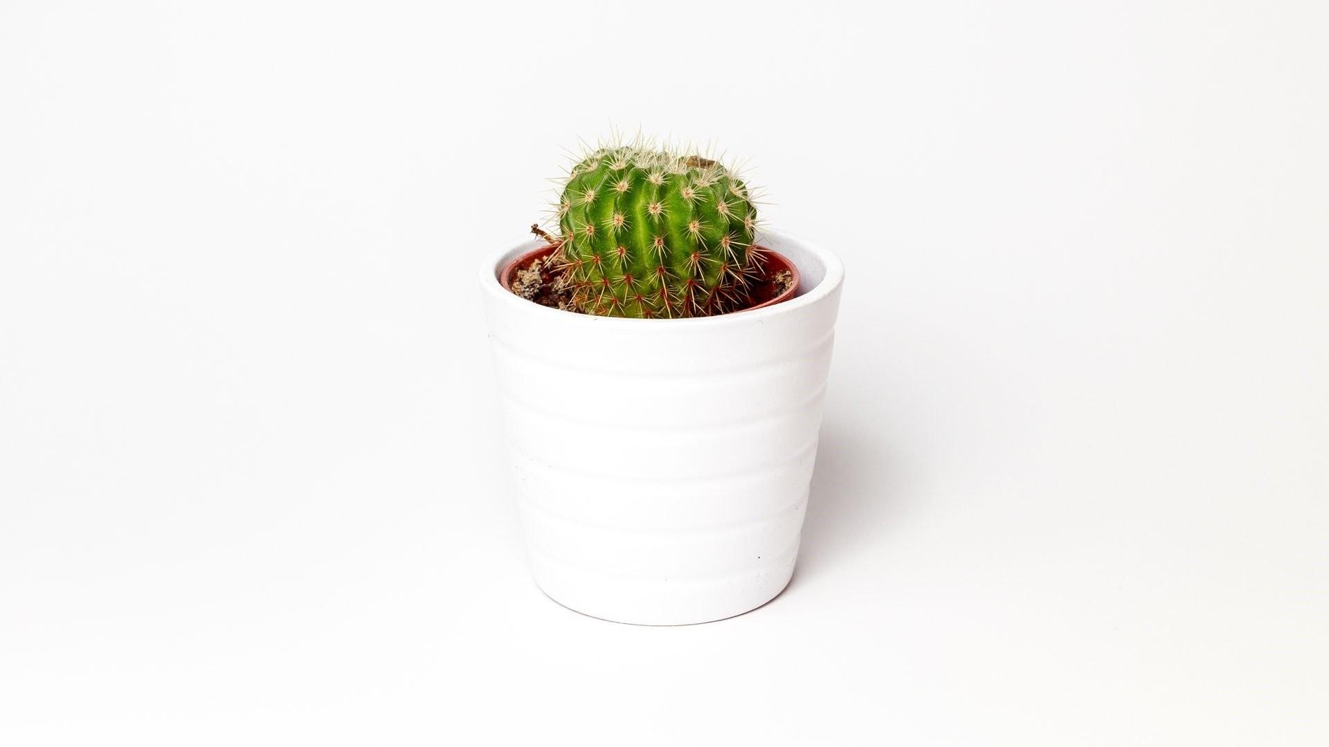 Cactus Minimalist HD Wallpaper