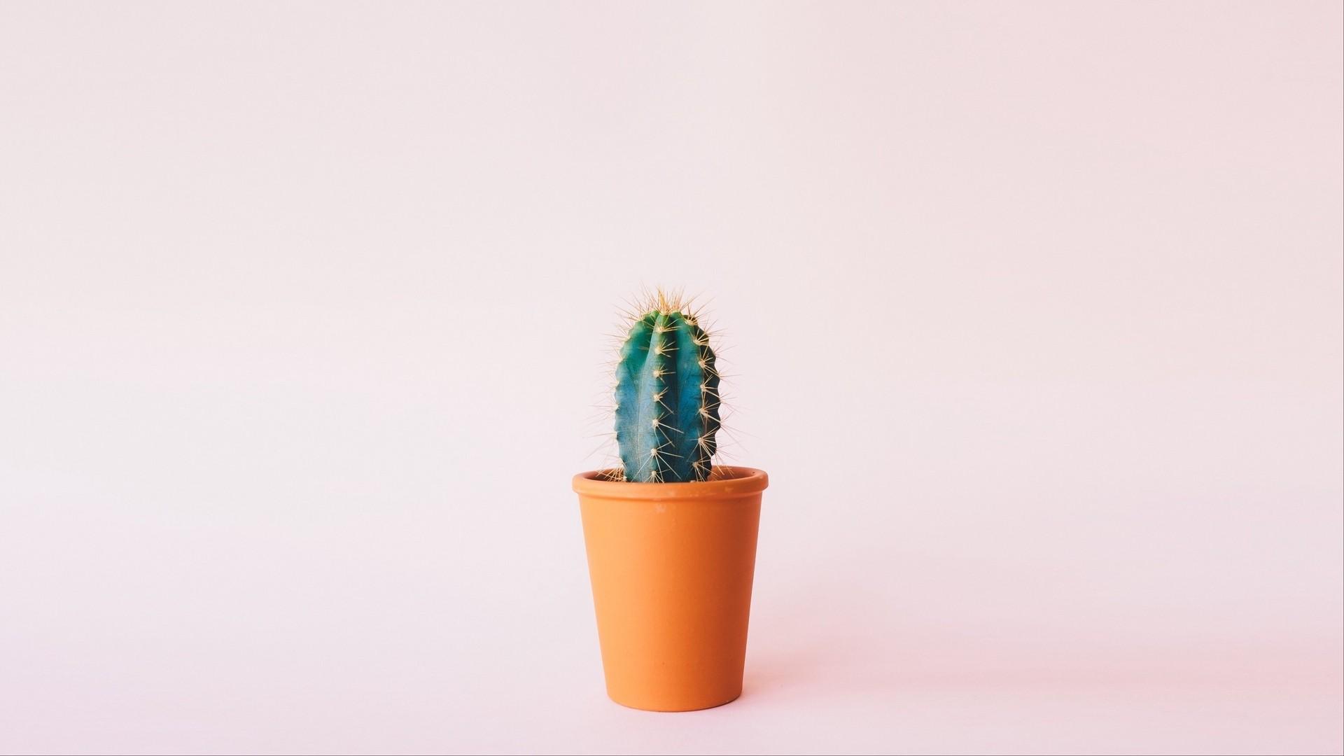 Cactus Minimalist computer wallpaper