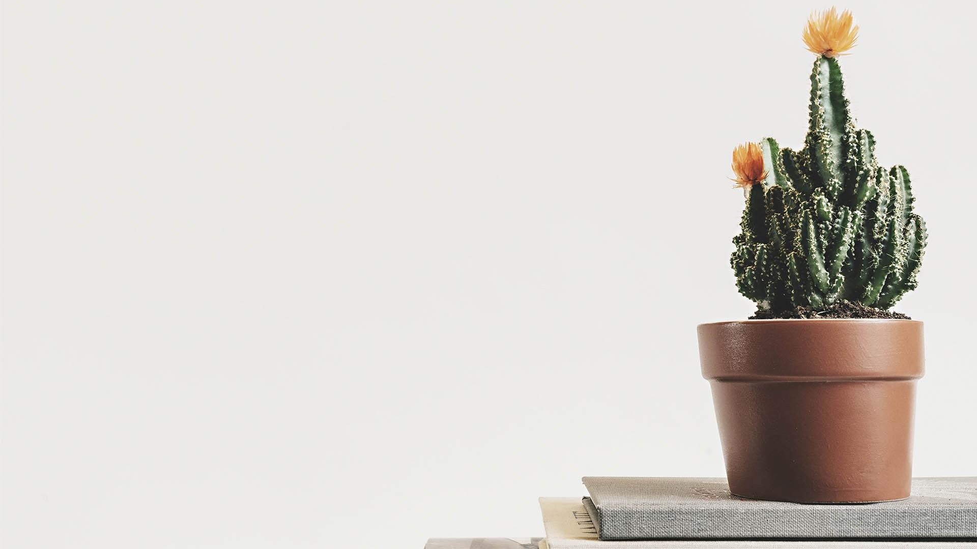 Cactus Minimalist Pic