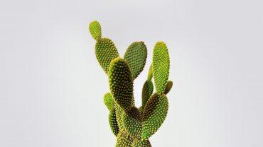 Cactus Minimalist Picture