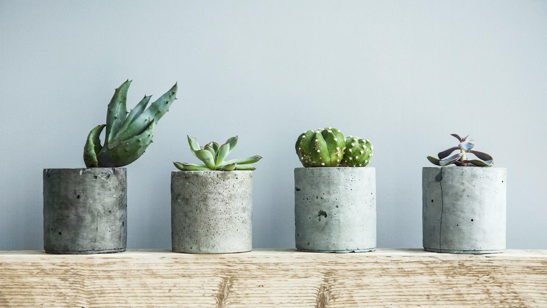 Cactus Minimalist wallpaper for computer