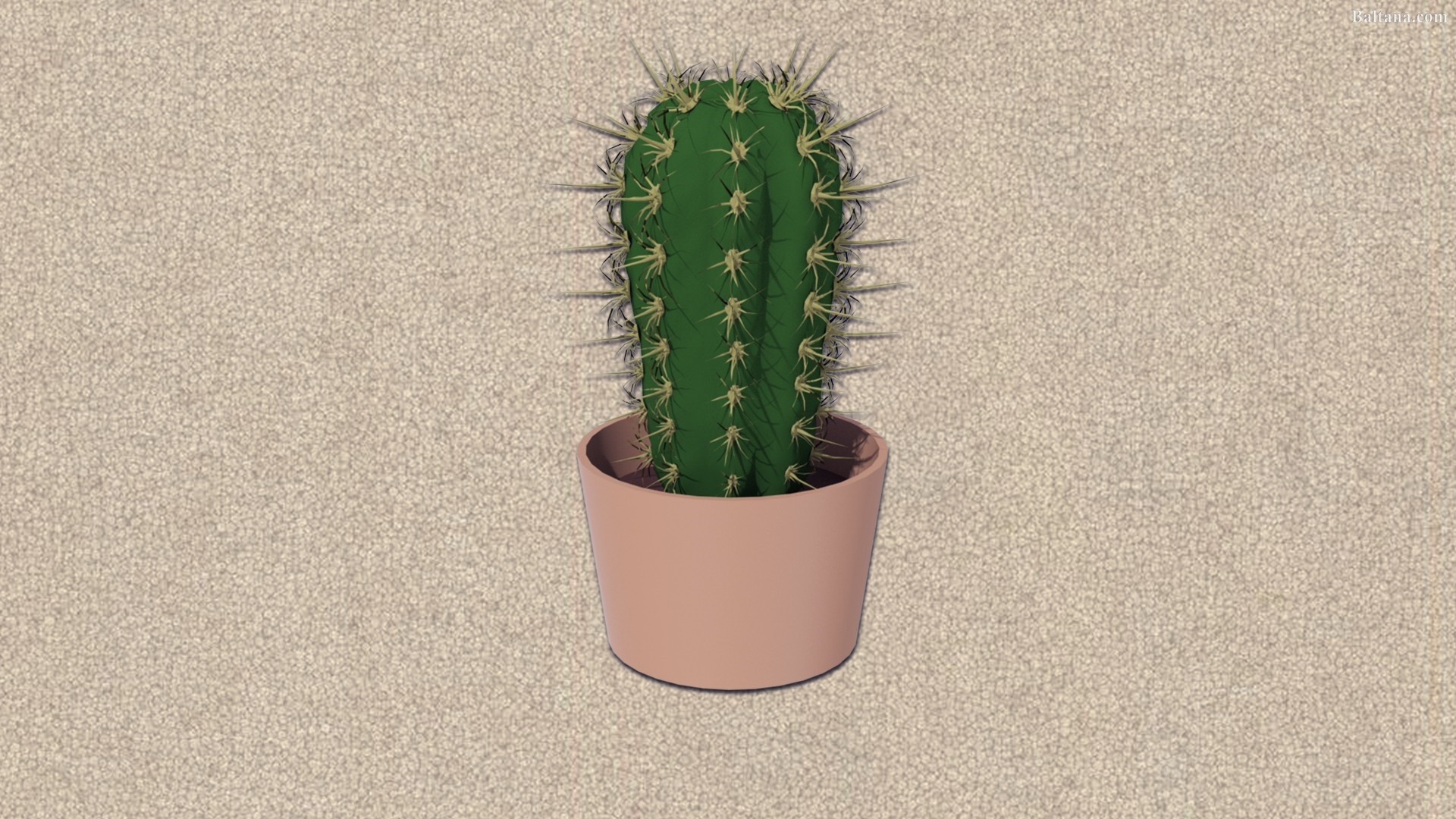 Cactus Minimalist Image