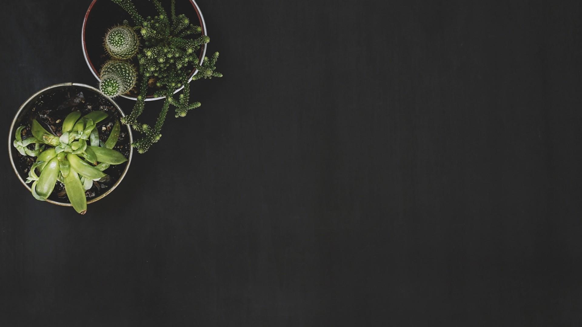 Cactus Minimalist desktop wallpaper hd