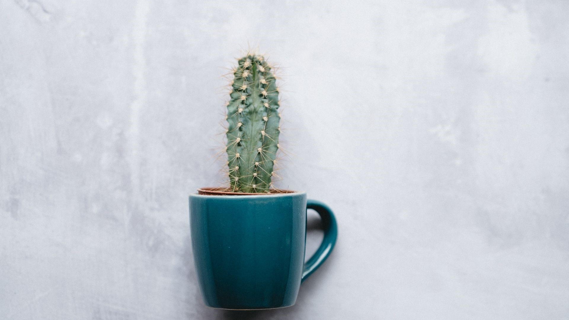 Cactus Minimalist wallpaper for desktop