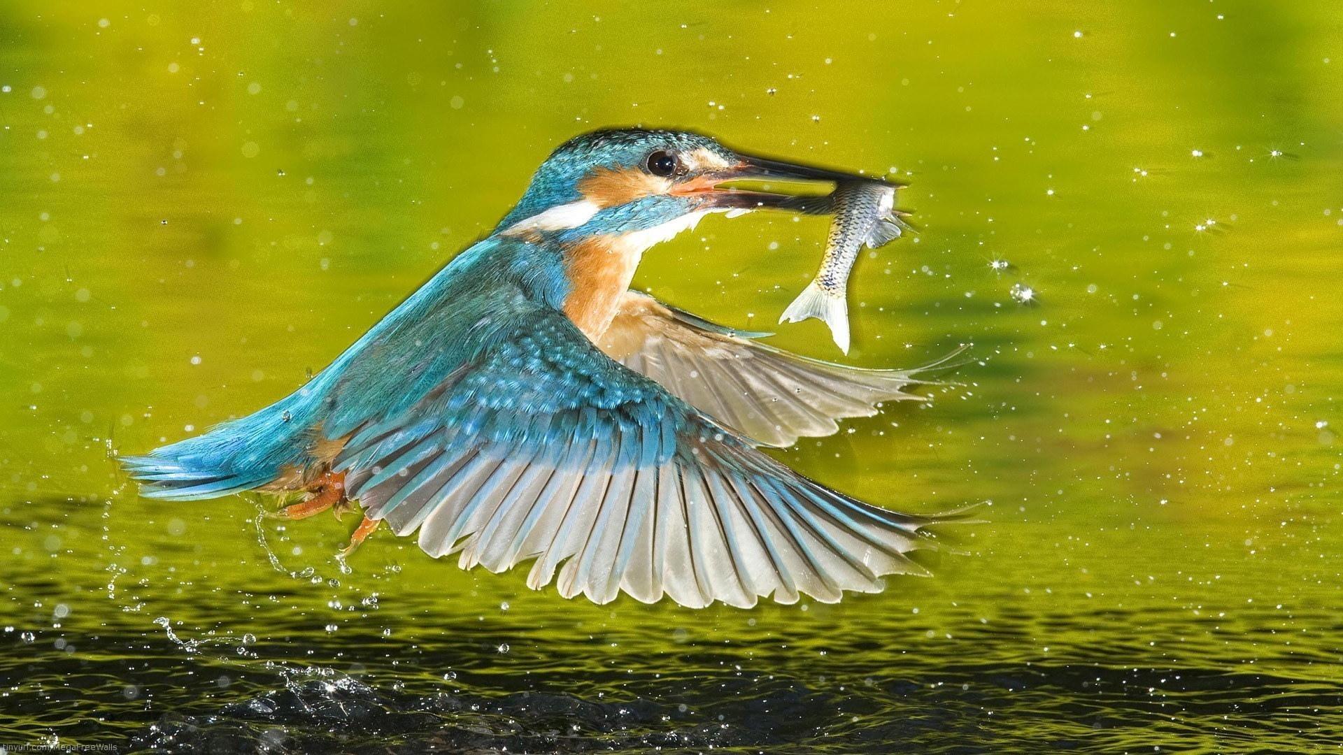 Kingfisher wallpaper photo hd