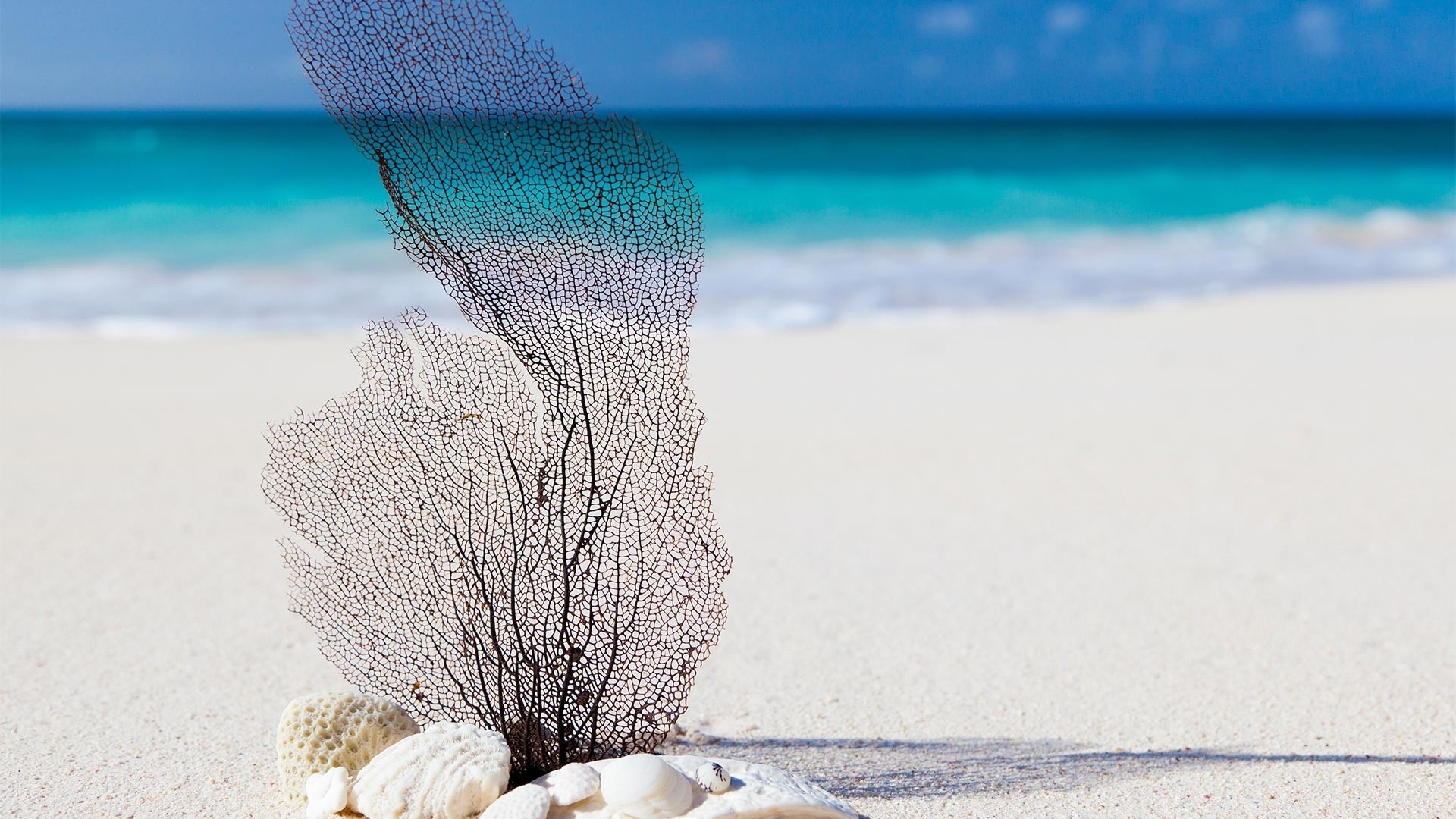 Sea White Sand wallpaper for desktop