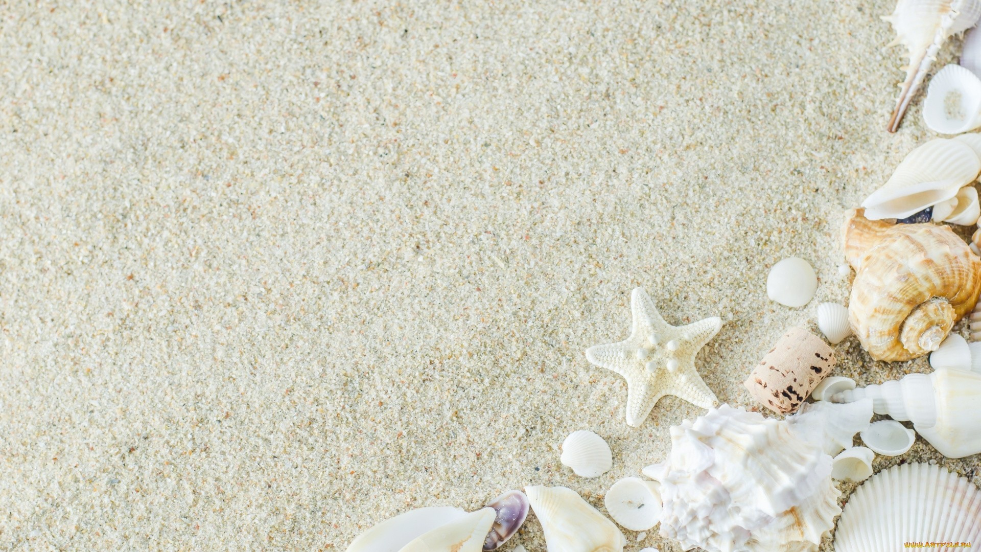 Seashell wallpaper photo hd