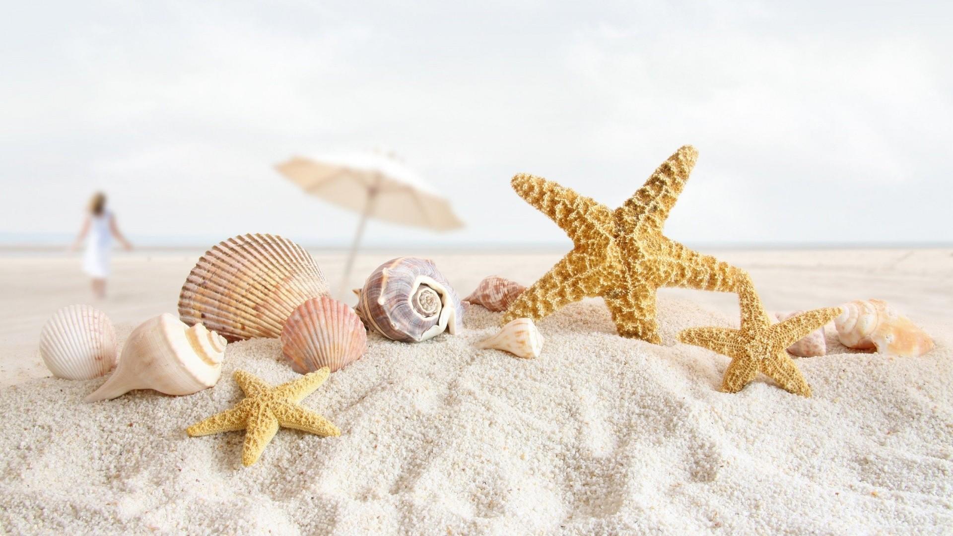 Seashell Image