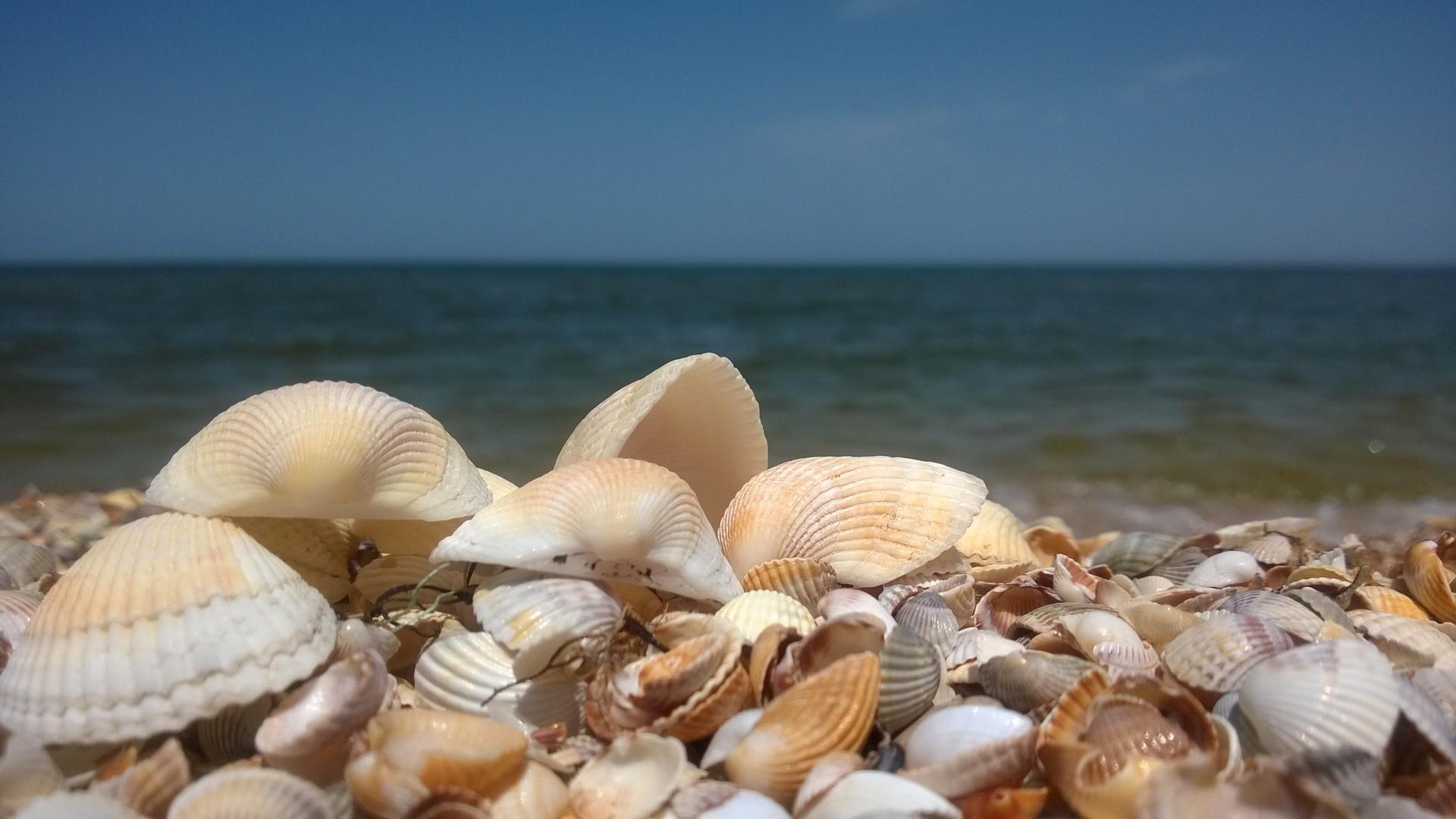 Seashell desktop wallpaper hd
