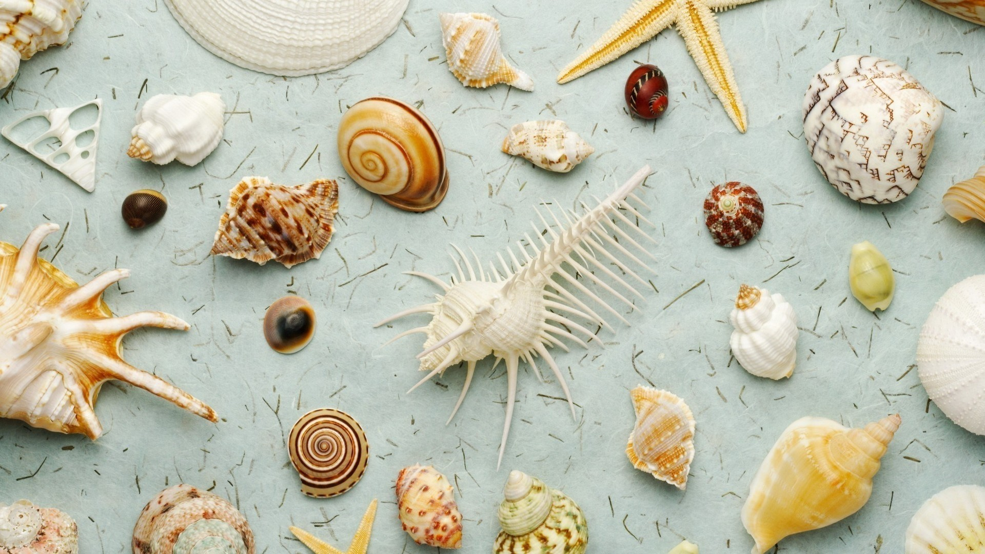 Seashell wallpaper for desktop