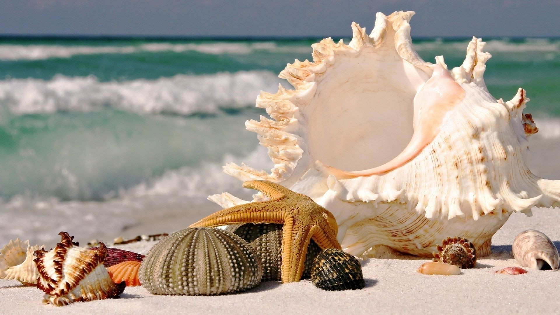 Seashell Picture