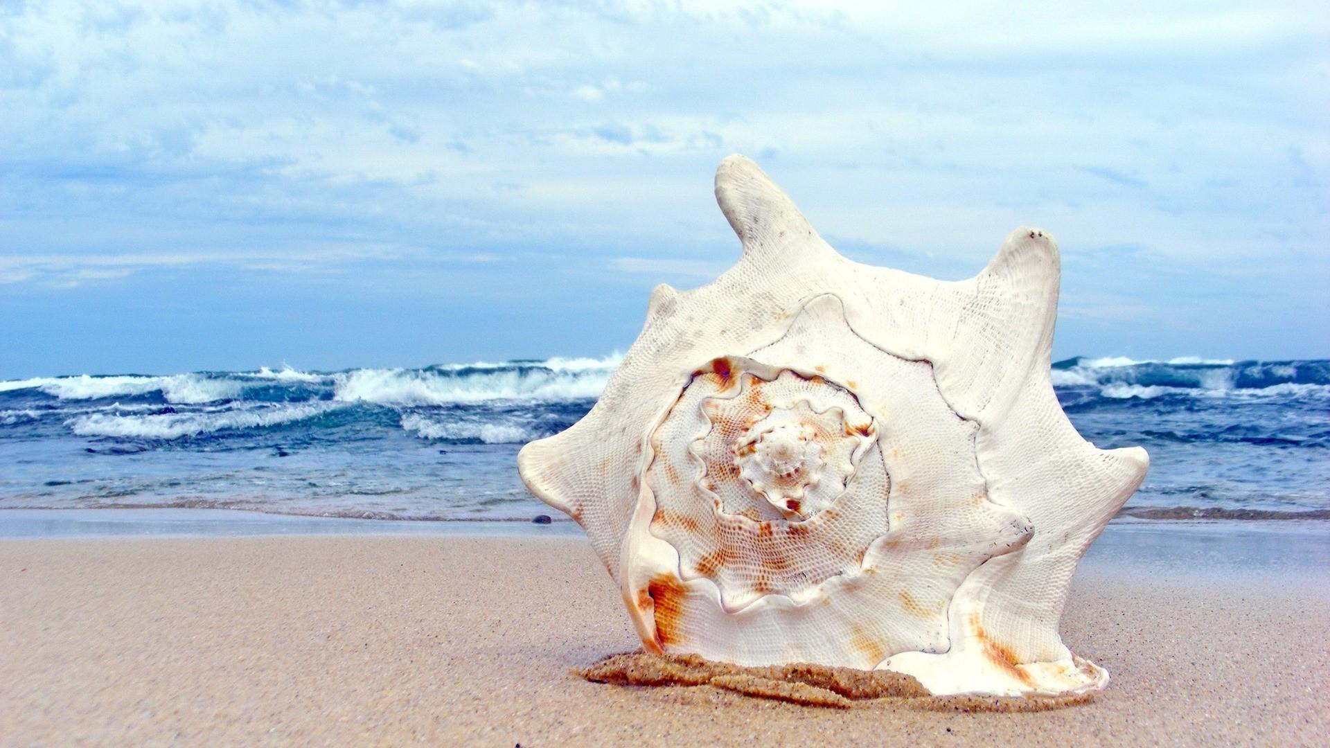 Seashell HD Wallpaper