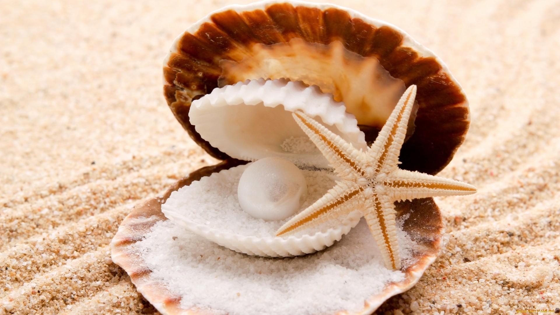 Seashell wallpaper for pc