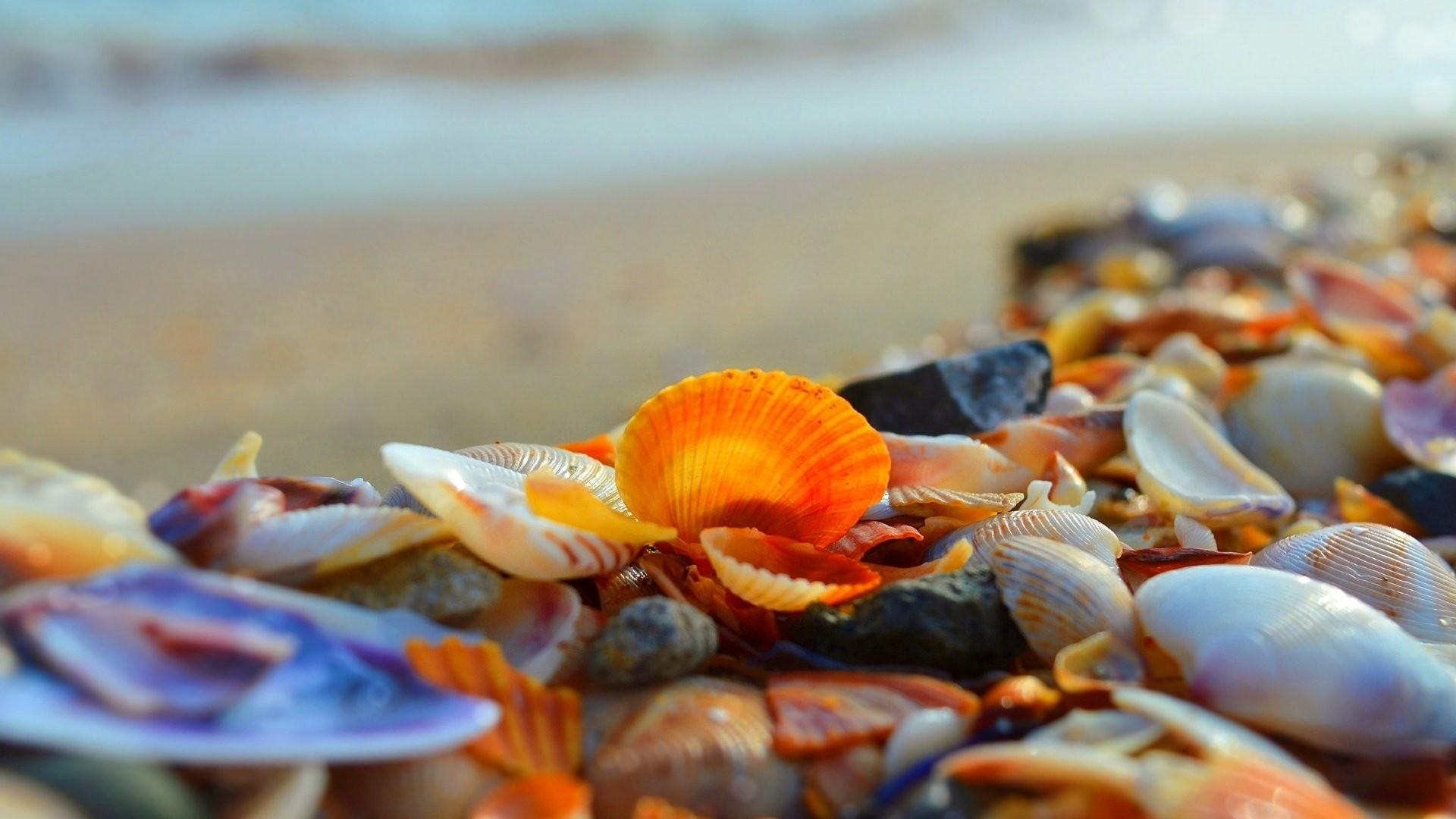 Seashell computer wallpaper