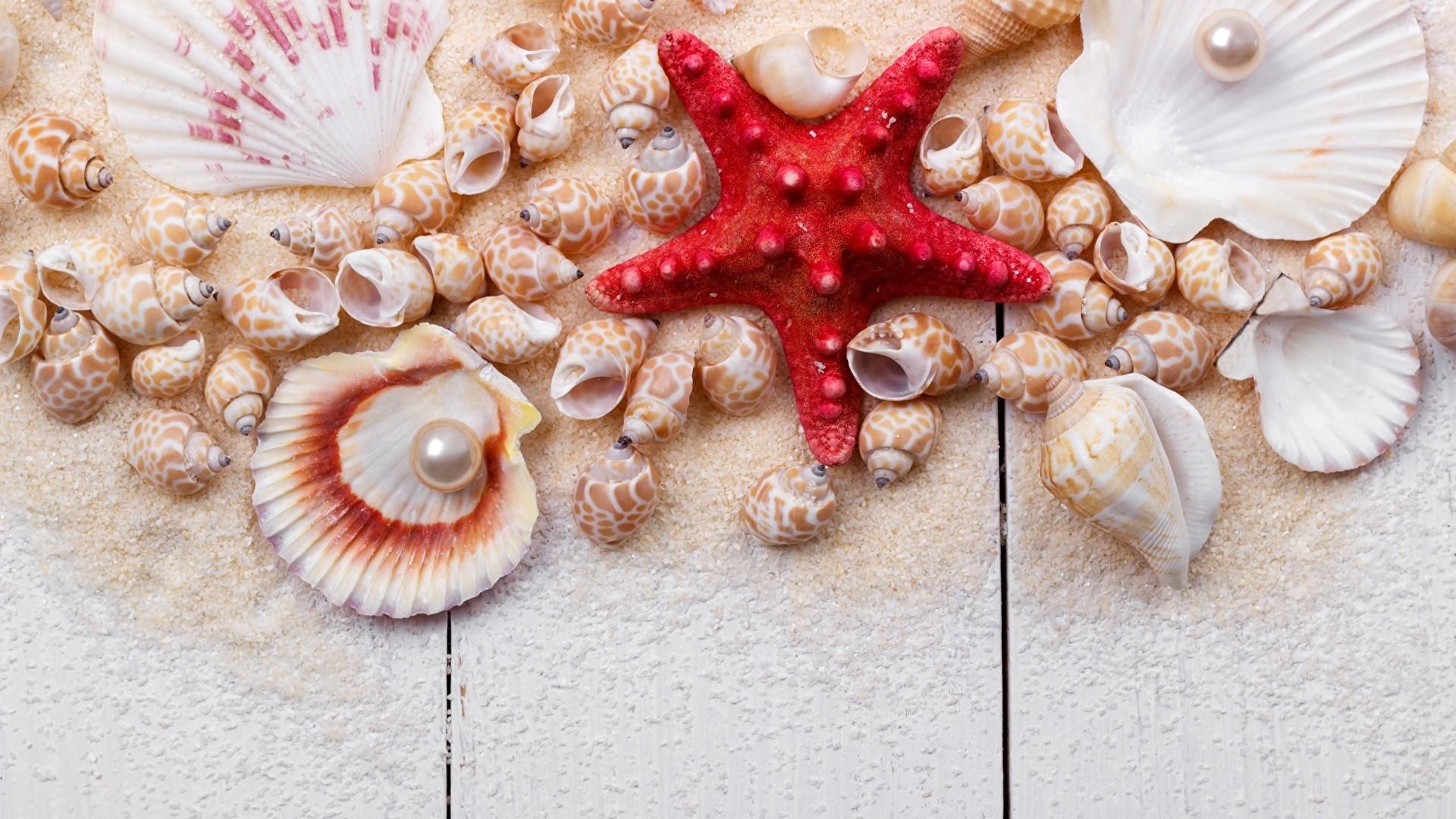 Seashells On Boards computer wallpaper