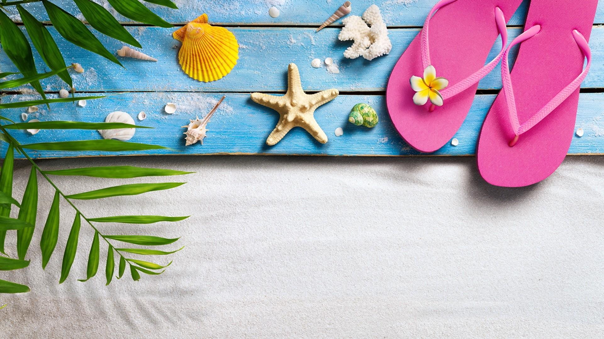 Seashells On Boards wallpaper for pc