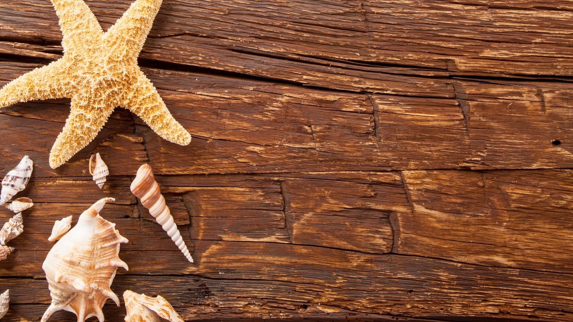 Seashells On Boards Wallpaper