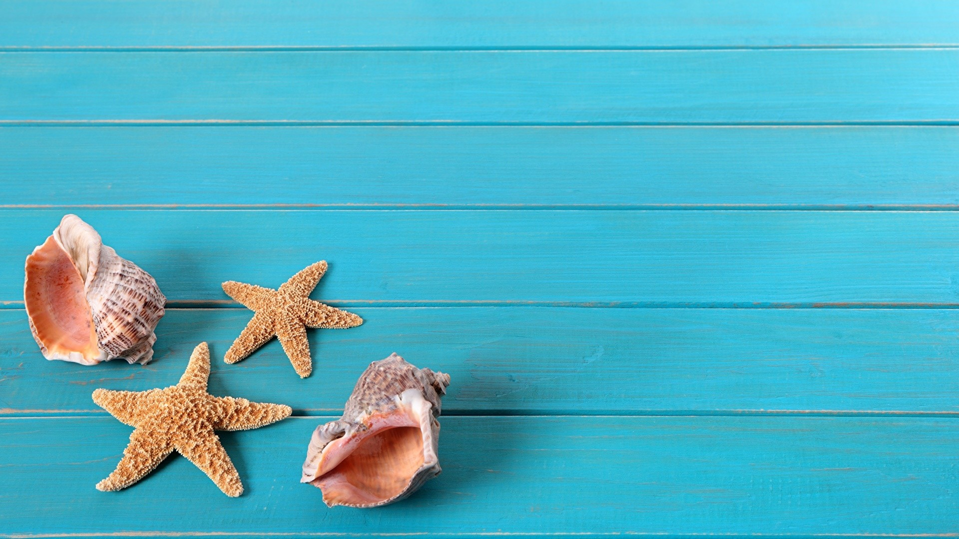 Seashells On Boards Picture