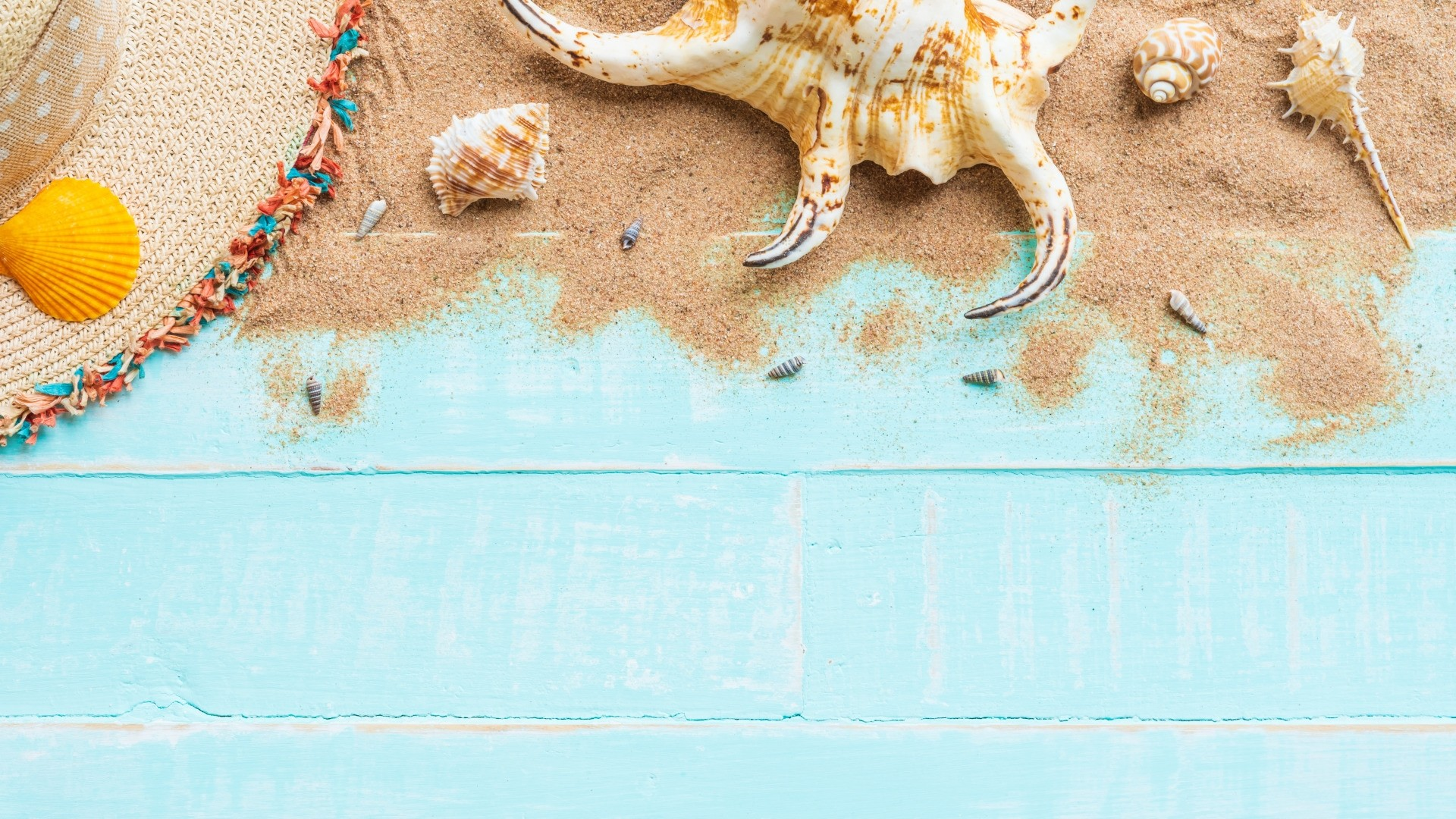 Seashells On Boards Pic