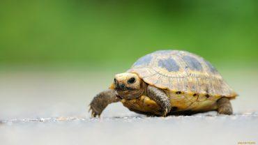 Turtle wallpaper photo hd