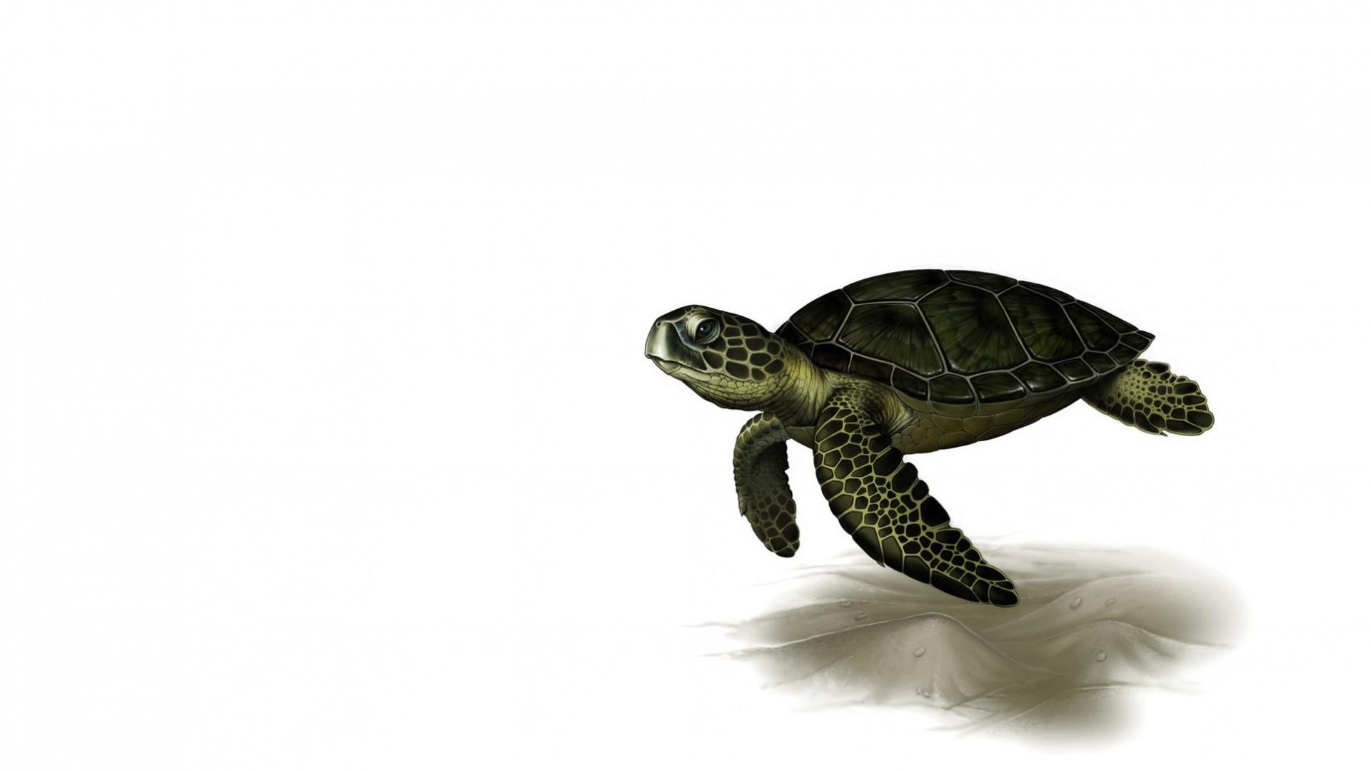 Turtle Minimalist wallpaper photo hd