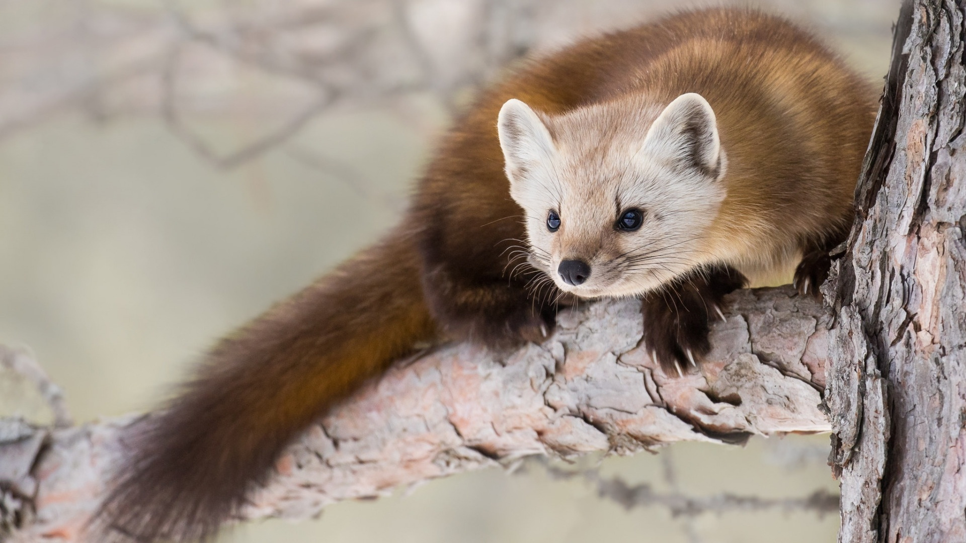Marten Wallpaper theme