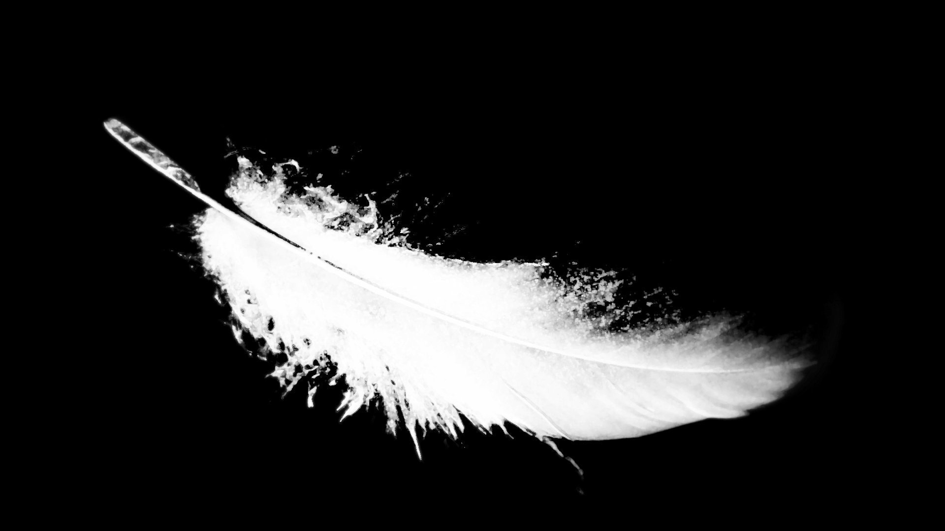 Bird Feather Pic