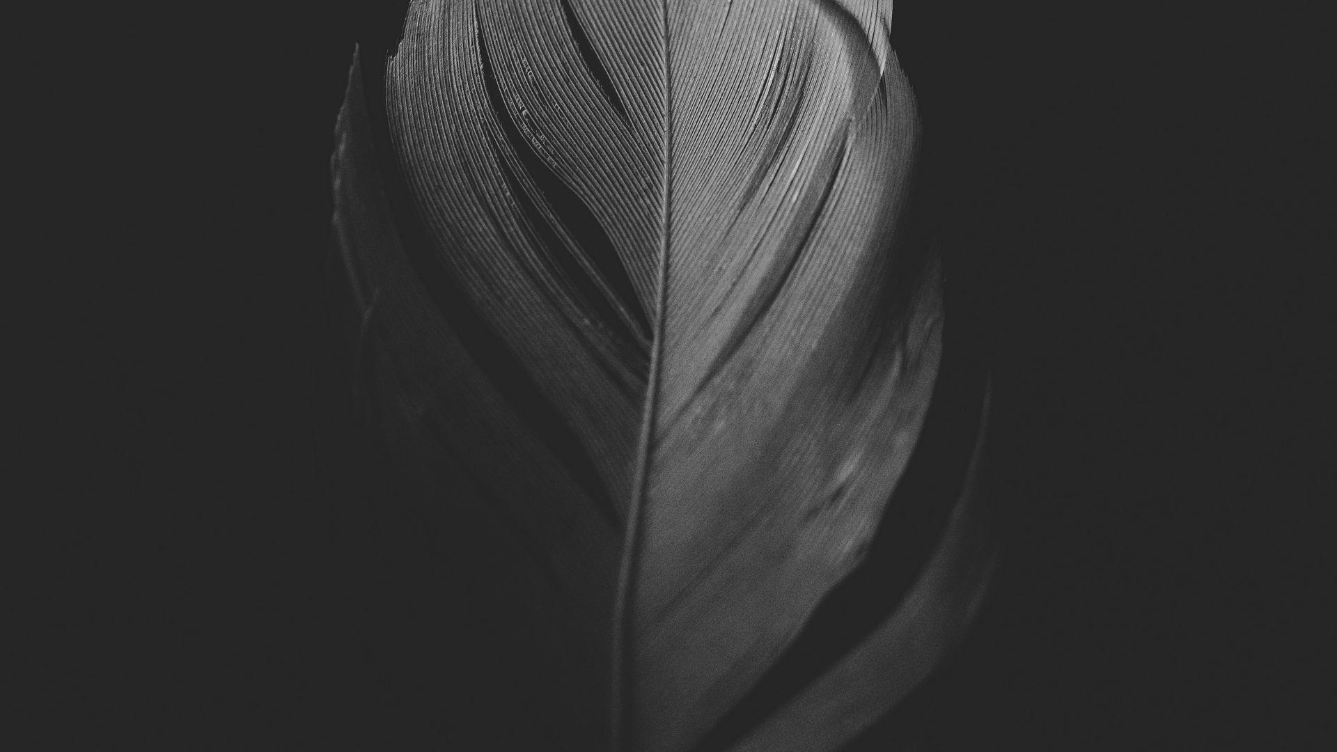Bird Feather wallpaper for desktop