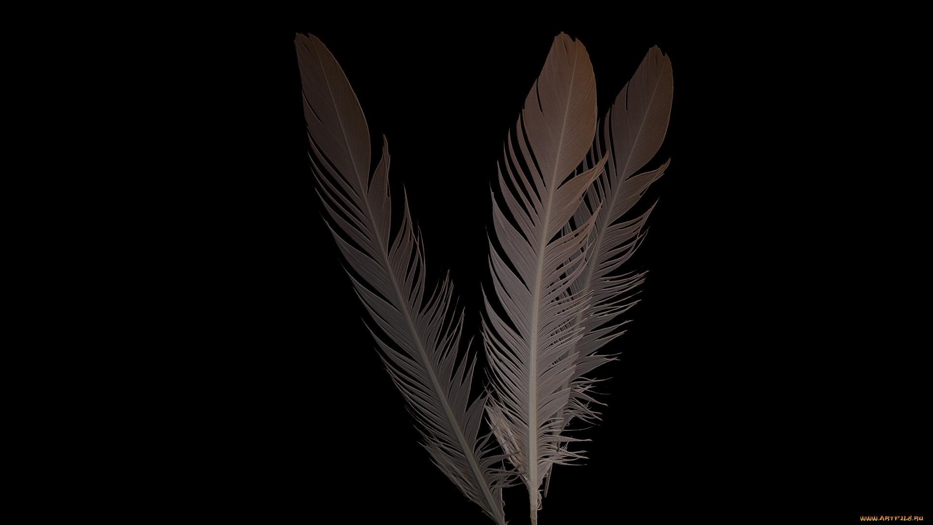 Bird Feather Desktop Wallpaper