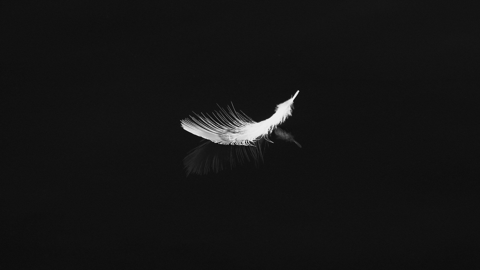 Bird Feather Picture