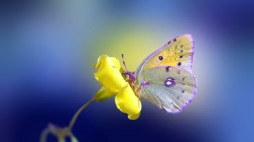 Butterfly On A Flower Image