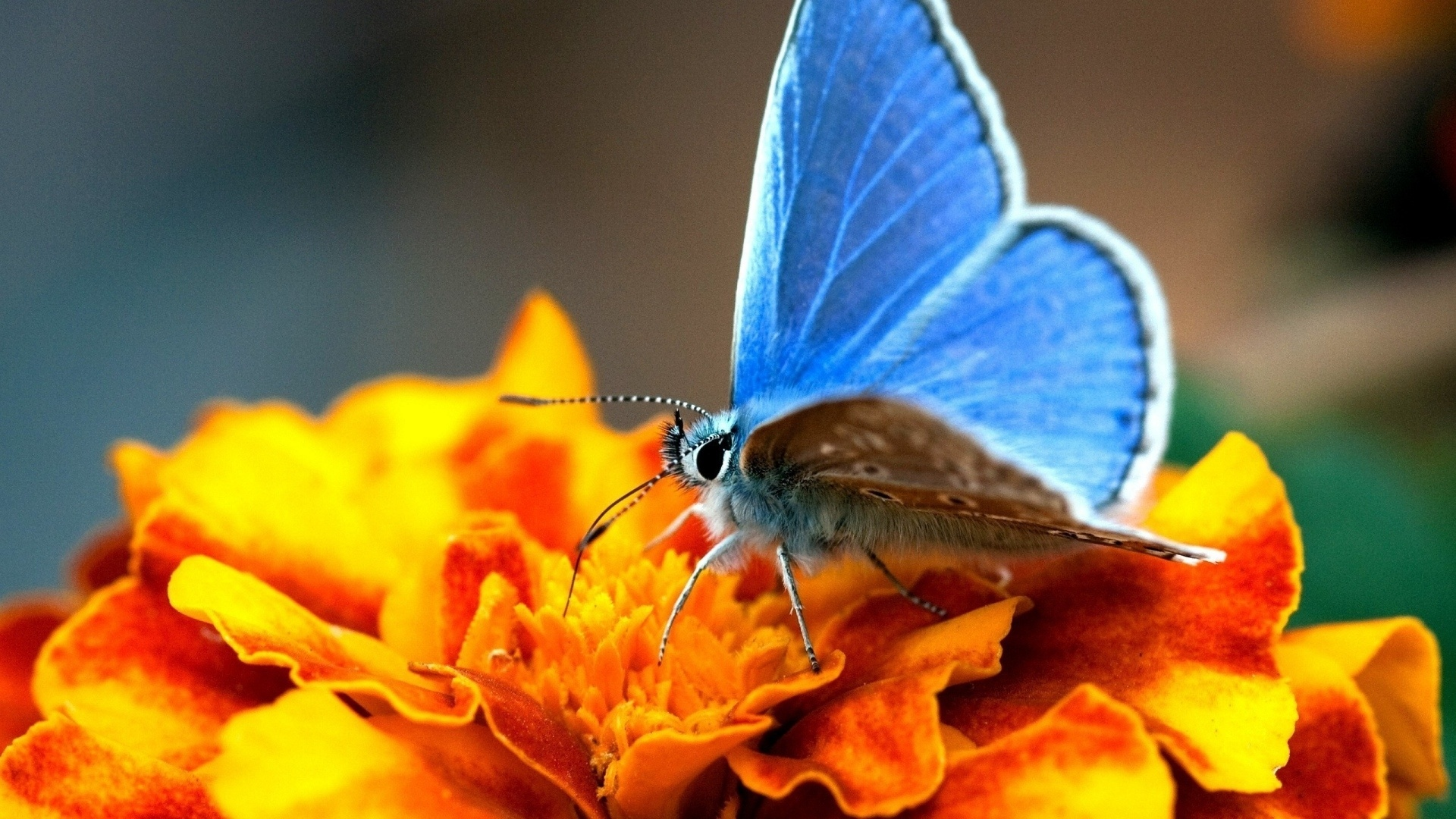 Butterfly On A Flower Pic