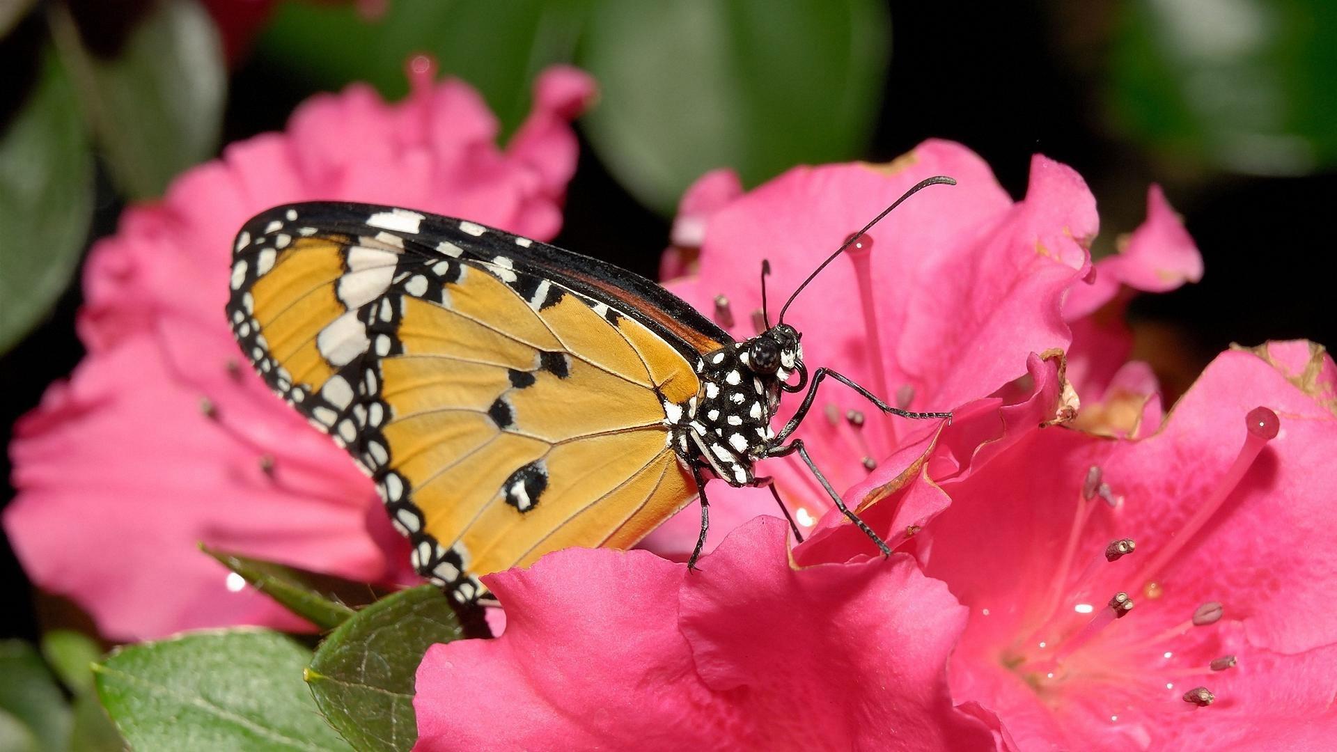 Butterfly On A Flower wallpaper photo hd
