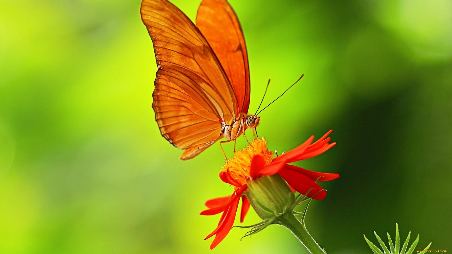 Butterfly On A Flower Wallpaper
