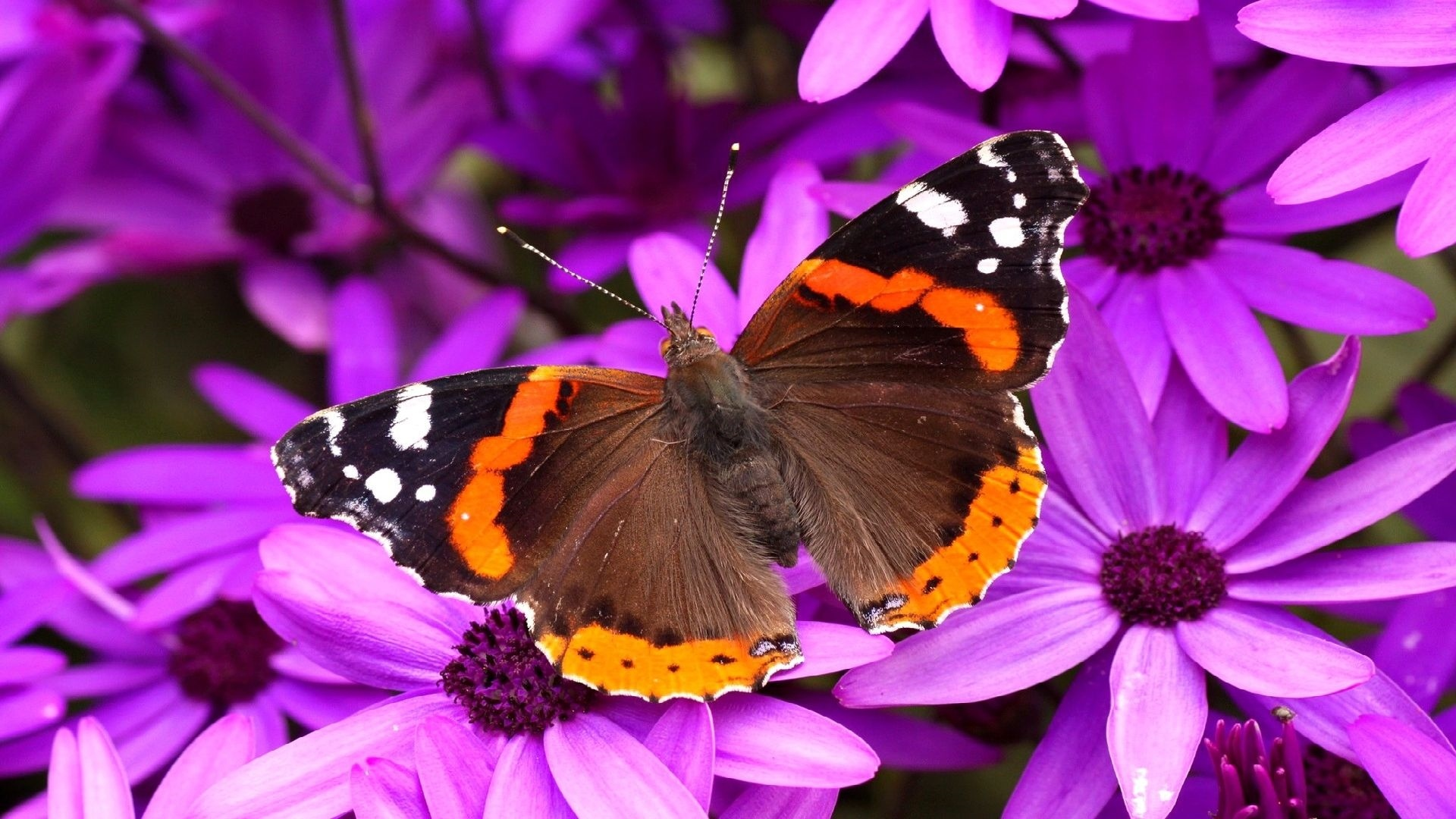 Butterfly On A Flower Picture