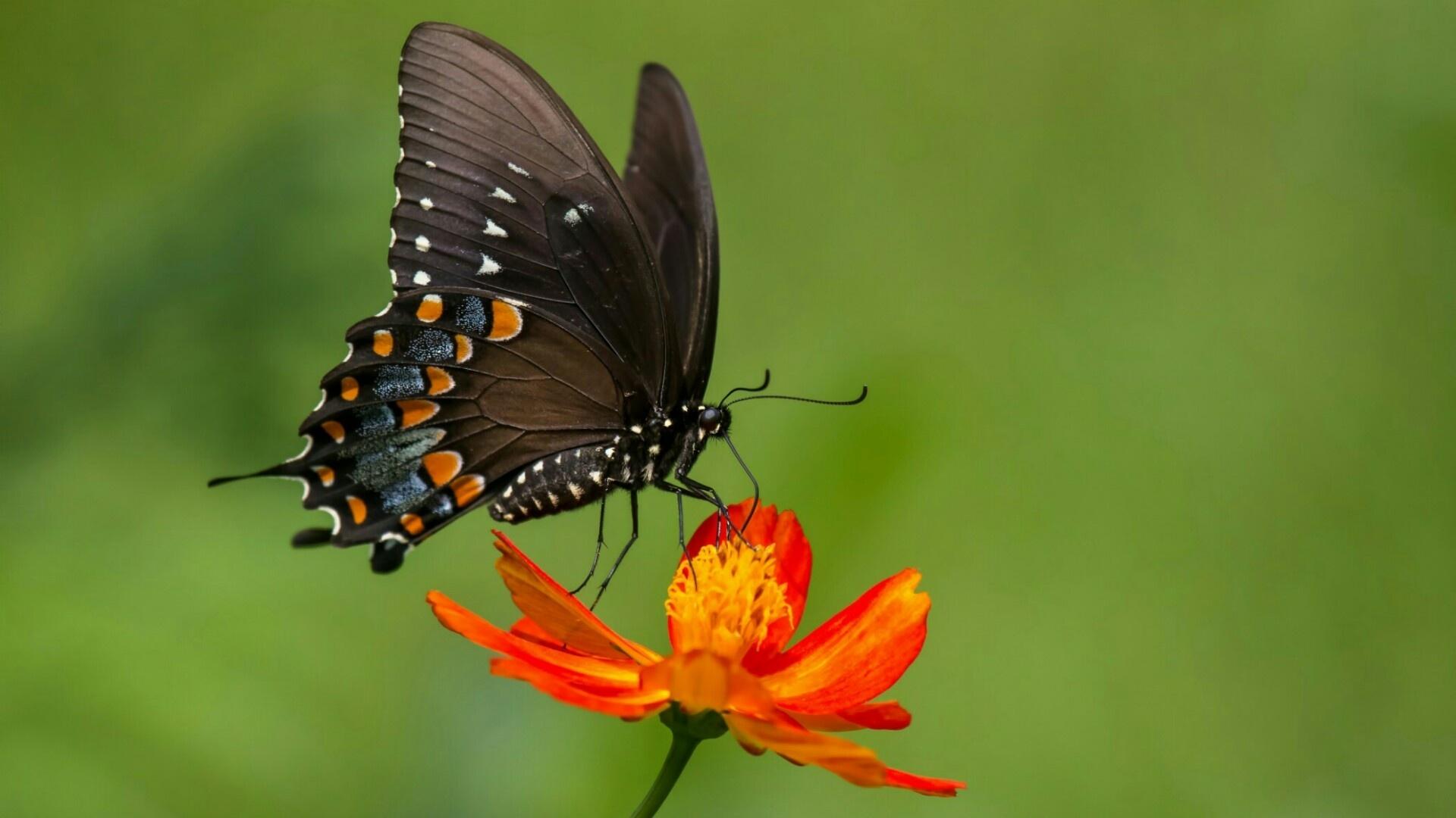 Butterfly On A Flower HD Wallpaper