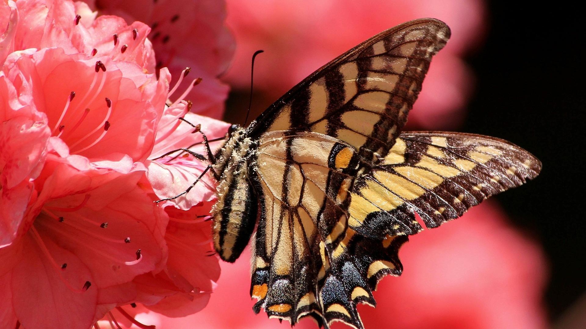 Butterfly On A Flower Wallpaper theme