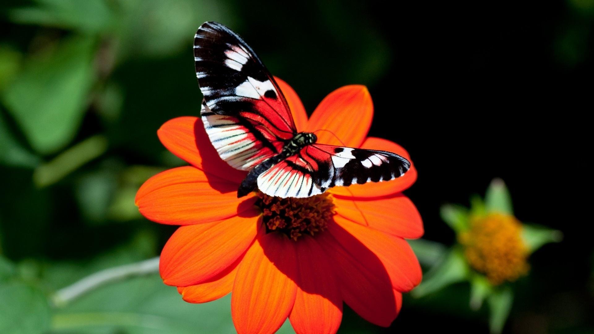 Butterfly On A Flower desktop wallpaper hd
