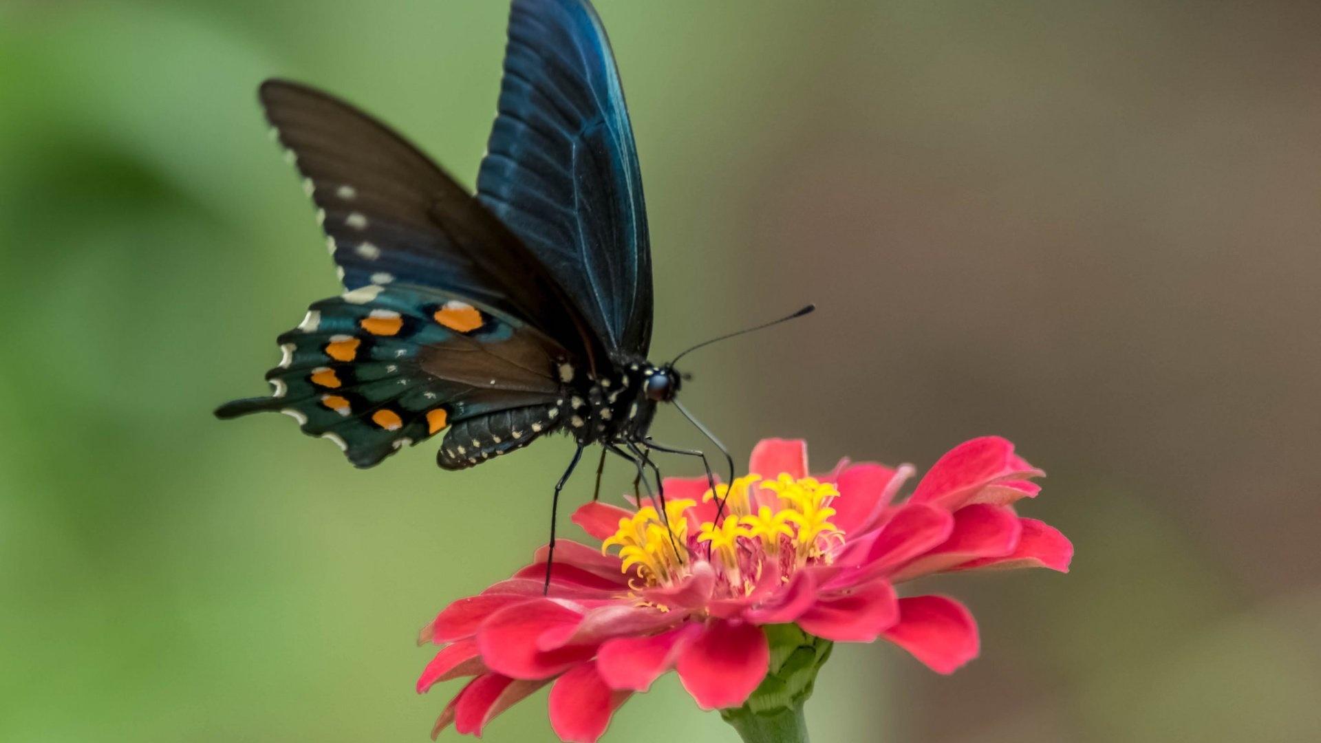 Butterfly On A Flower wallpaper for desktop