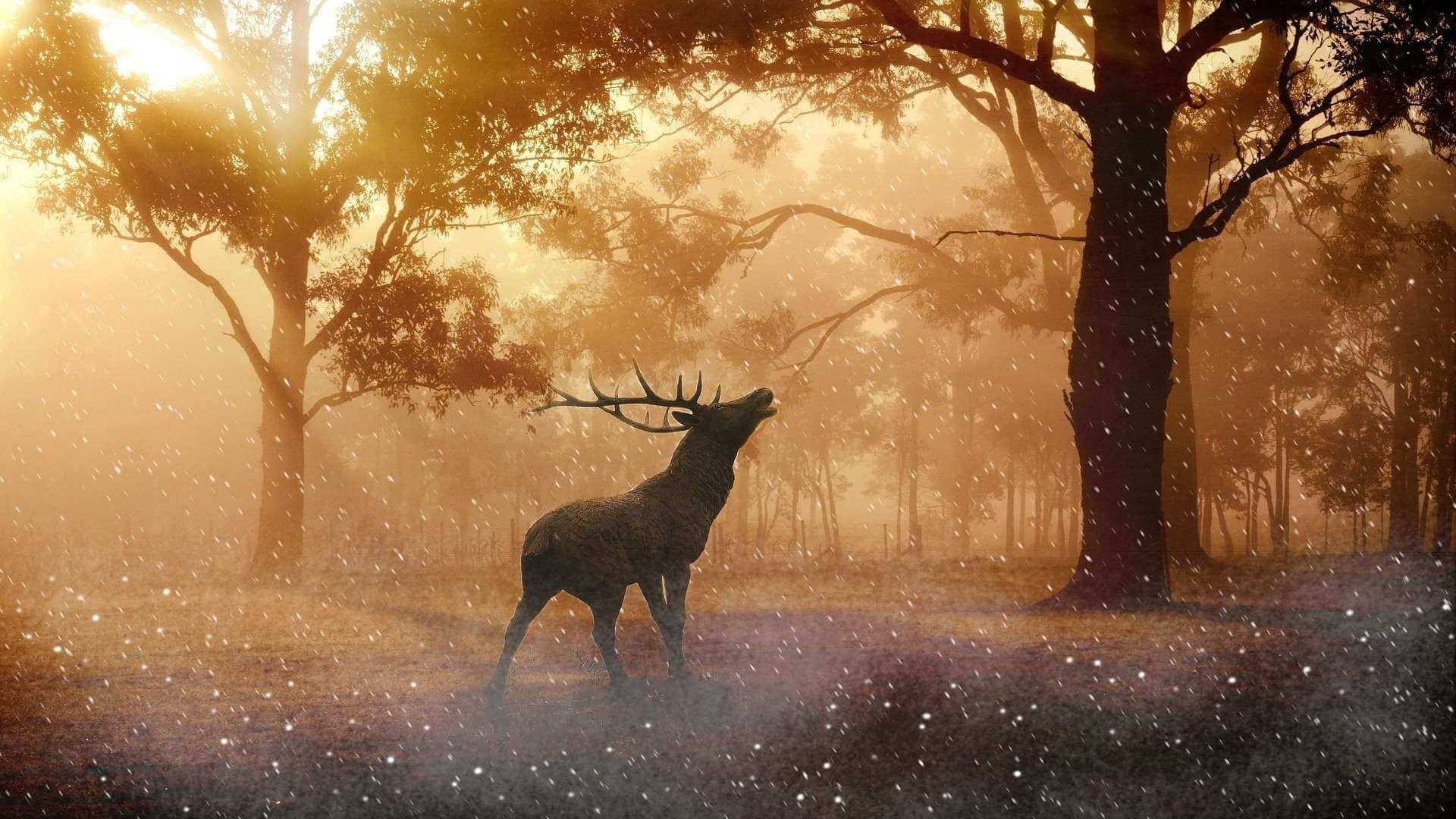 Deer In The Forest wallpaper photo hd