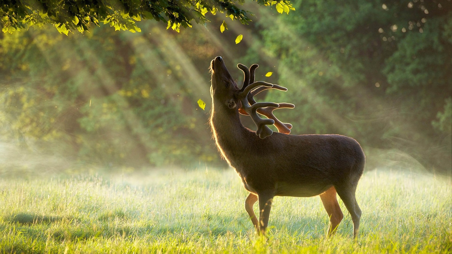 Deer In The Forest Picture