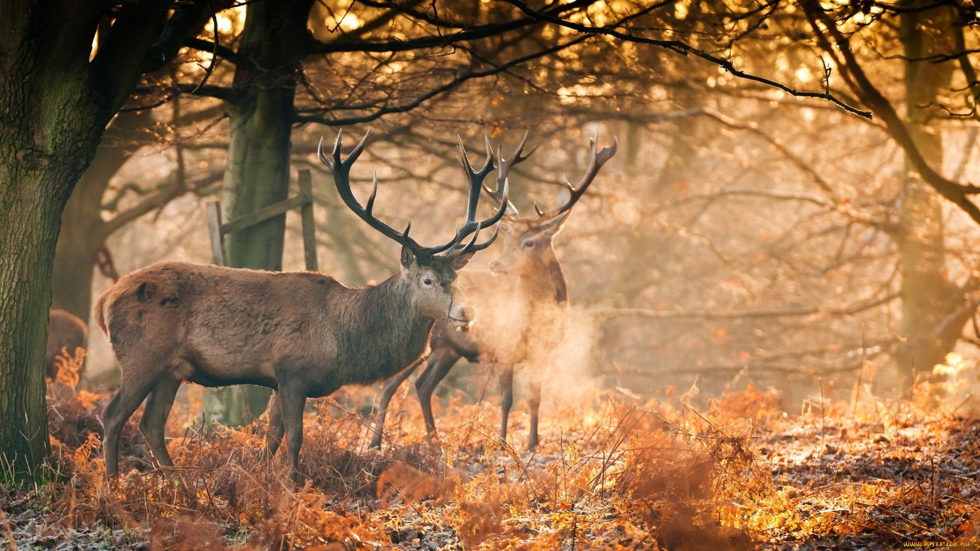 Deer In The Forest Pic