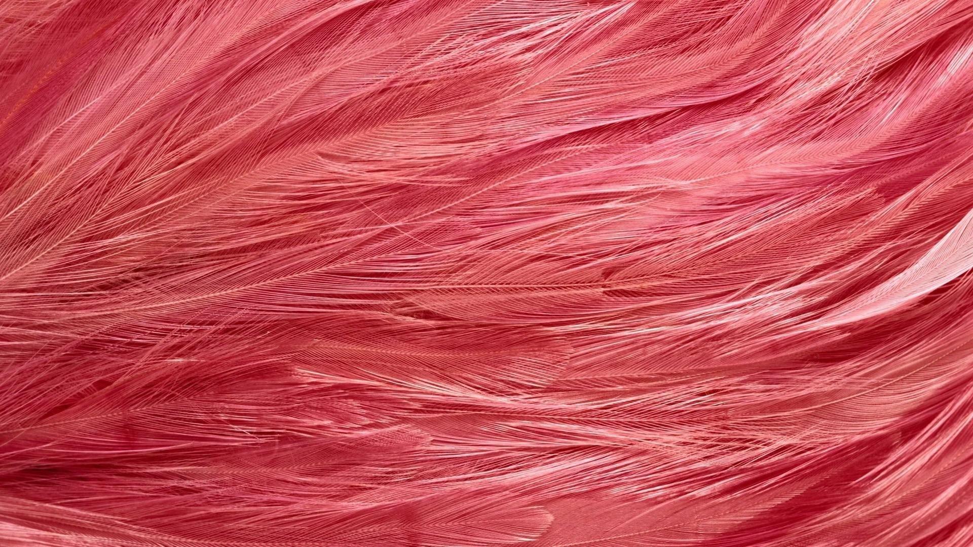 Feathers desktop wallpaper hd